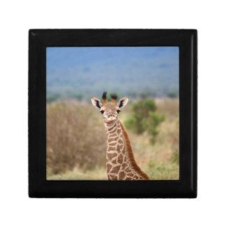 Baby giraffe picture, Kenya, Africa | Small Keepsake Box