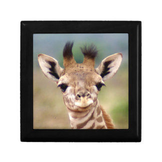 Baby giraffe picture, Kenya, Africa | Small Trinket Boxes
