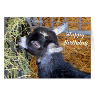 Baby Goat 159 Birthday Card