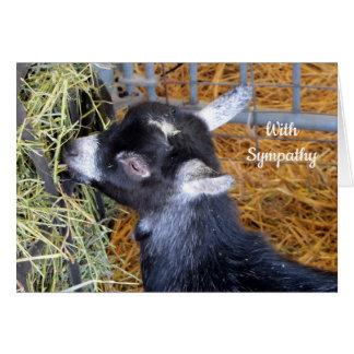 Baby Goat 159 Sympathy Card