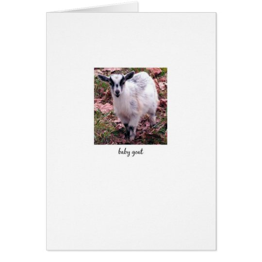 Baby Goat Card