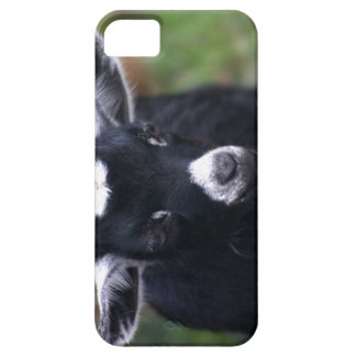 Baby Goat iPhone 5 Cover
