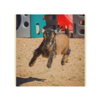 Baby Goat Jumping Wood Prints