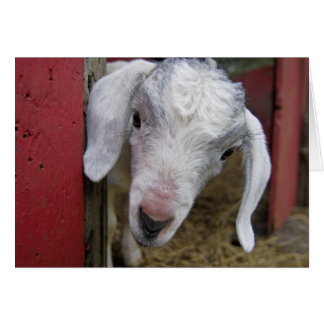 Baby Goat Peaks Out From Red Barn Card