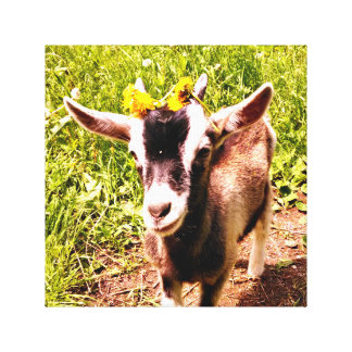 Baby Goat with Flowers - Wrapped Canvas Print