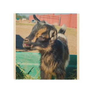 Baby Goat Wood Prints