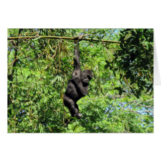 Baby Gorilla (2035)  - Birthday Card