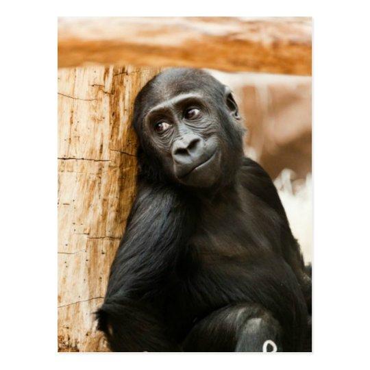 Baby gorilla postcard