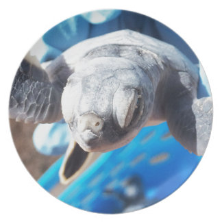 Baby Green Turtle Party Plates