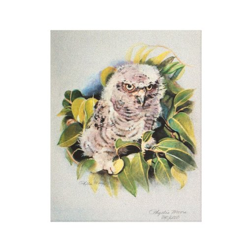 Baby Ground Owl Stretched Canvas Print