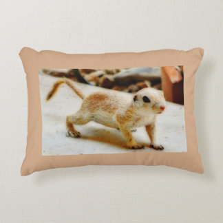 Baby Ground Squirrel in Orion Pillow
