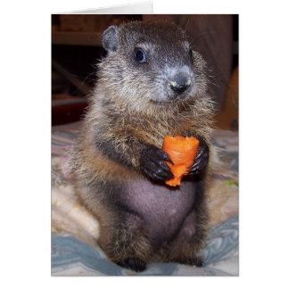 Baby Groundhog Maude Note Card