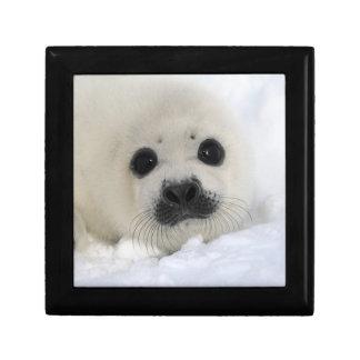 Baby Harp Seal Gift Box