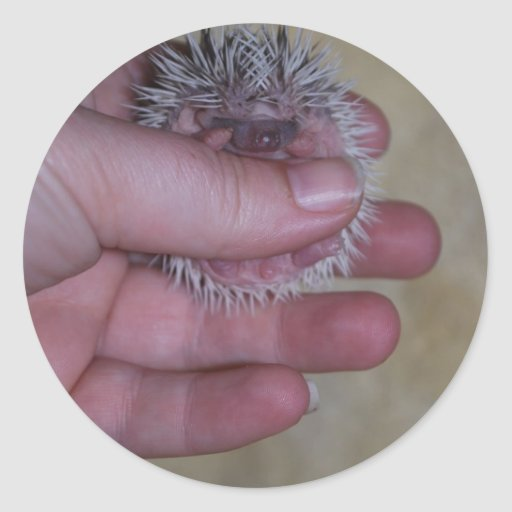 Baby Hedgehog in Hand Stickers