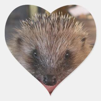 Baby Hedgehog Sticker