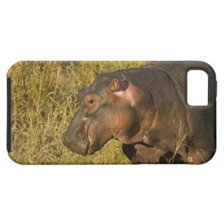 Baby Hippo out of water away from adults along Case For The iPhone 5