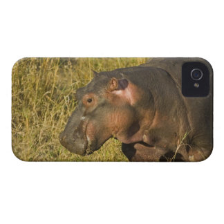 Baby Hippo out of water away from adults along iPhone 4 Case-Mate Cases