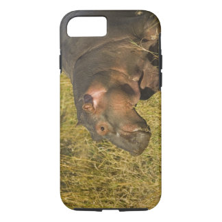 Baby Hippo out of water away from adults along iPhone 7 Case