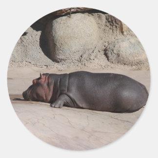 Baby Hippo Round Sticker