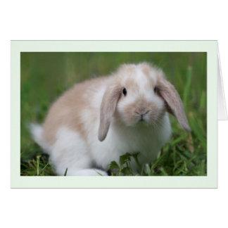 Baby Holland Lop Rabbit Card