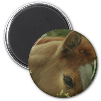 Baby Horse Magnet Magnets