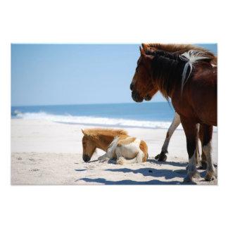 Baby Horse Photographic Print
