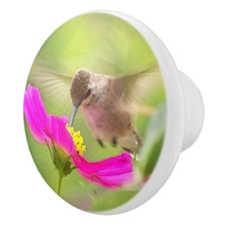 Baby Hummingbird Bird Wildlife Animal Floral Knob