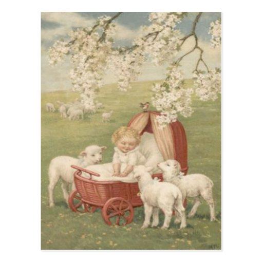 Baby Lamb Dogwood Tree Field Post Cards