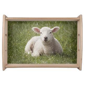 Baby lamb photography serving tray