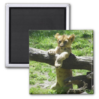 Baby Lion Cub On Branch Magnet