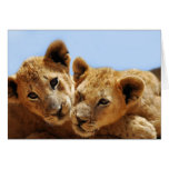 Baby lion love greeting card