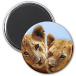 Baby lion love magnet