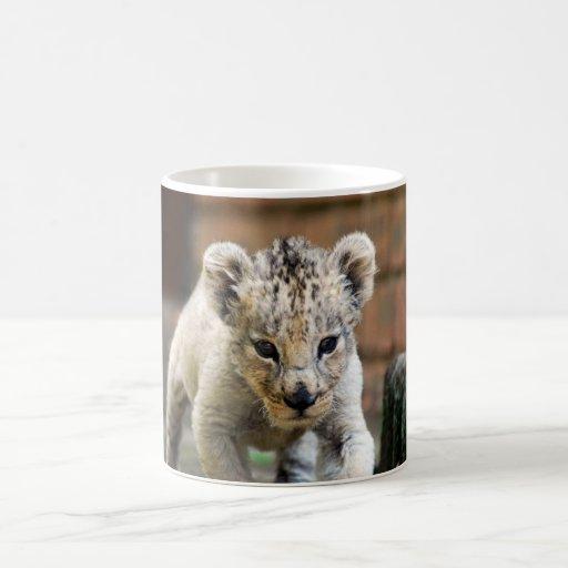 Baby lion prowler coffee mugs