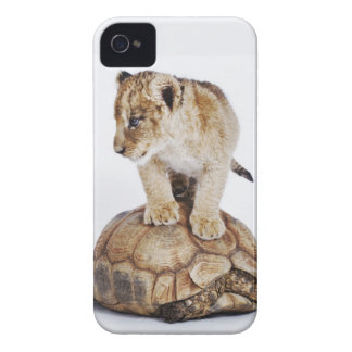 Baby lion standing on tortoise, white background Case-Mate iPhone 4 case