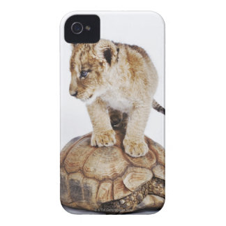 Baby lion standing on tortoise, white background iPhone 4 cases