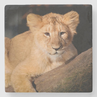 Baby Lion Stone Coaster