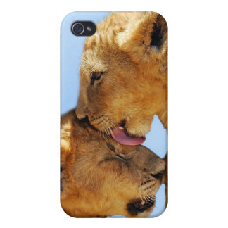 Baby lions love case for the iPhone 4