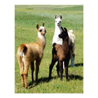 Baby Llama huddle Letterhead