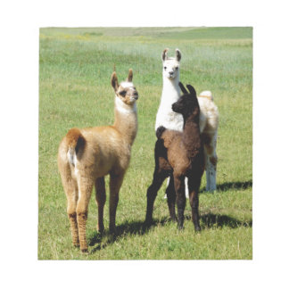 Baby Llama huddle Notepad