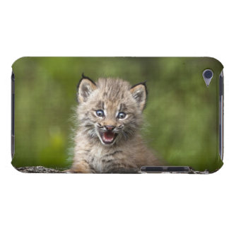 Baby Lynx (Lynx Canadensis) Looking Over A Barely There iPod Covers