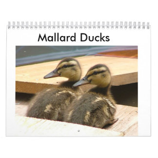 Baby Mallard Ducks Wall Calendars