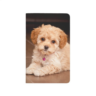 Baby Maltese poodle mix or maltipoo puppy dog Journals