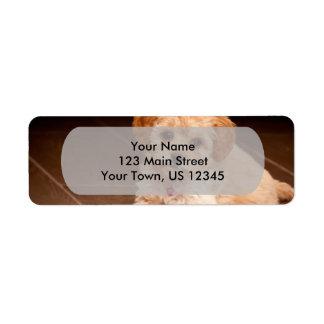 Baby Maltese poodle mix or maltipoo puppy dog Return Address Label