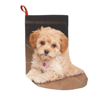 Baby Maltese poodle mix or maltipoo puppy dog Small Christmas Stocking