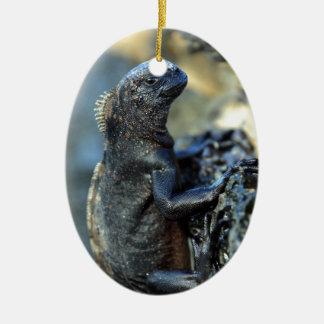 Baby marine iguana Galapagos Islands Ceramic Ornament