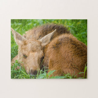 Baby Moose Sleeping In Grass, Baby Animal Jigsaw Puzzle