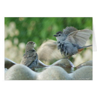 Baby Nuthatch Card