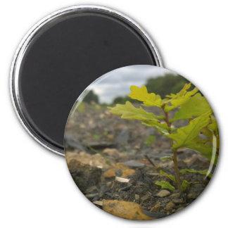 Baby Oak 2 Inch Round Magnet