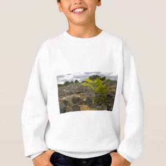 Baby Oak Sweatshirt