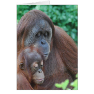 Baby Orangutan with Mother  Greeting Card
